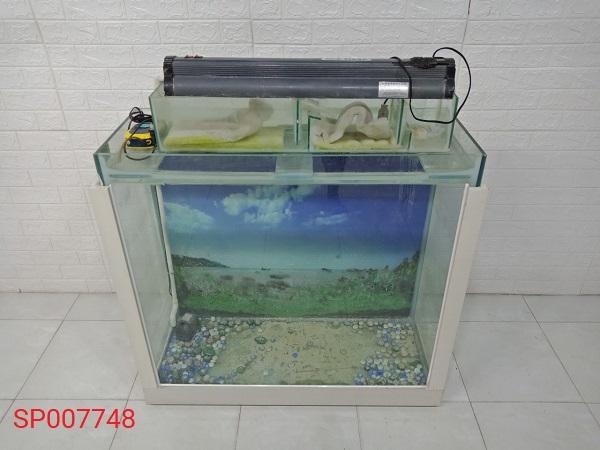 Hồ cá cũ SP007748