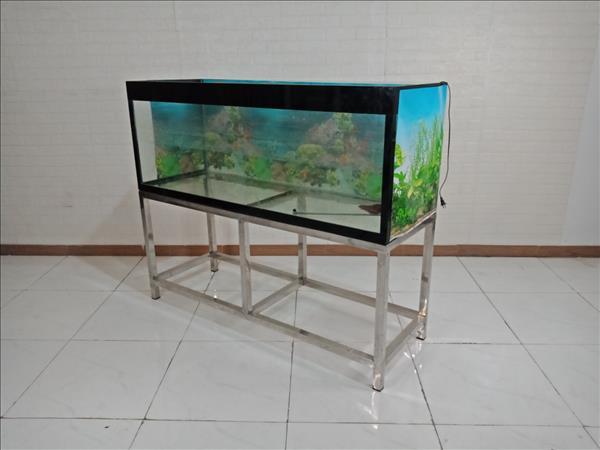 Hồ cá + cá Kim Long cũ SP009292