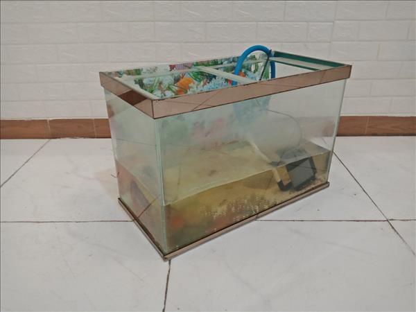 Hồ cá cũ + cá La Hán SP009293