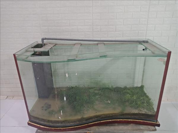 Hồ cá cũ SP009546
